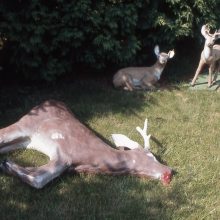 lawn_ornament_with_deer_erik_peterson_2004.jpg