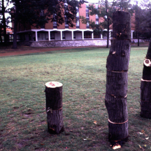 tree_build_erik_peterson_2002.jpg
